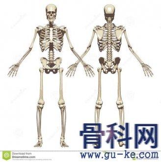 人有206块骨头,国人却只204块,少两块去哪了