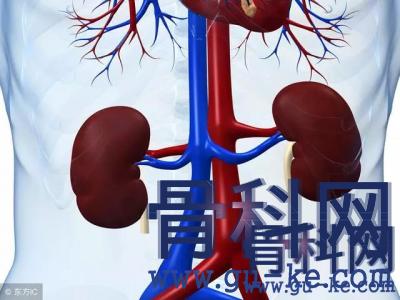 痛风高尿酸,肾脏伤怎么办,如何更快降尿酸,减少肾脏损伤?