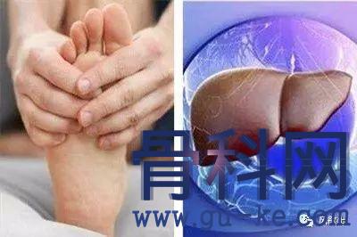 痛风和高尿酸血症是如何影响肝脏功能的呢?