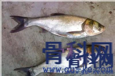 得了痛风,哪类鱼不能随便吃,痛风吃鱼的注意事项有哪些?