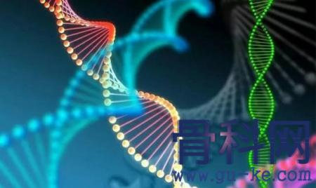 类风湿关节炎的遗传概率有多大?